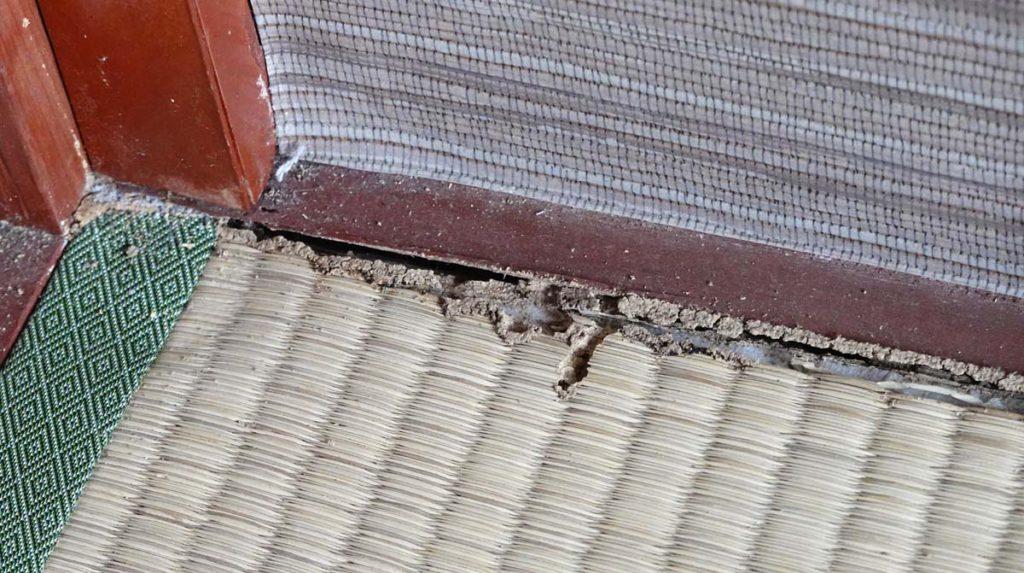マンション4階に発生したカンザイシロアリの被害