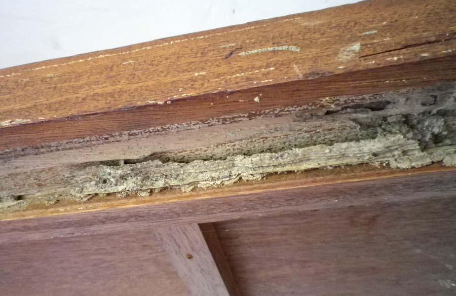 シロアリの被害にあった木材