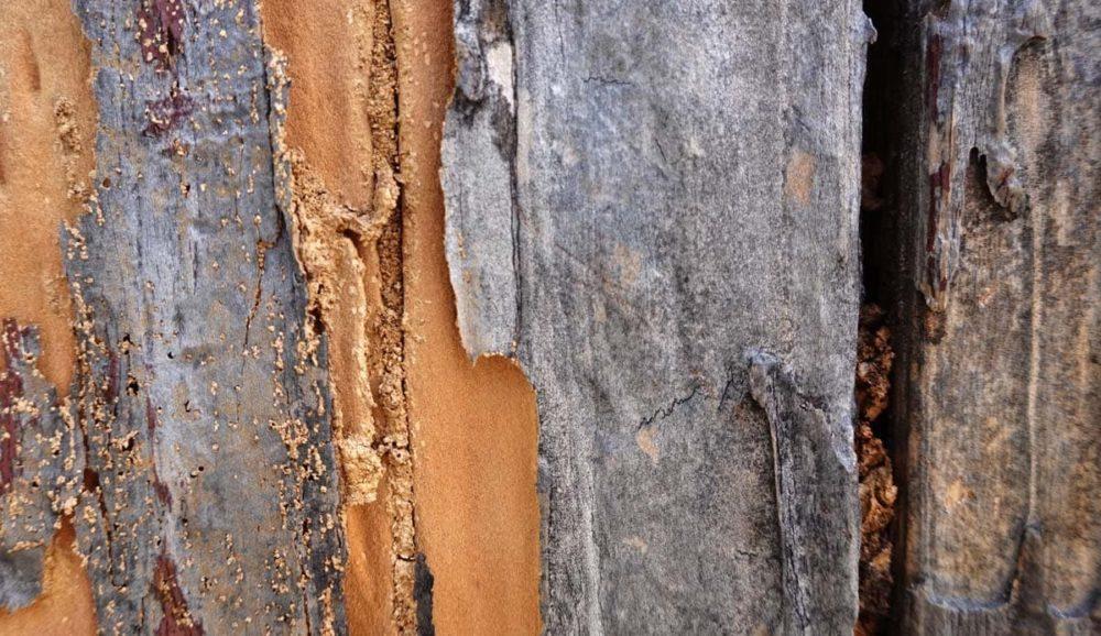 ヤマトシロアリの被害にあった木材